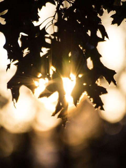 Winter Sun Through Leaves