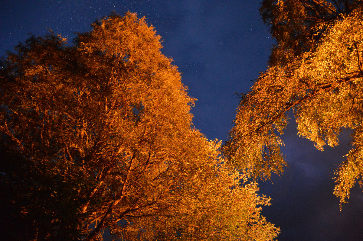 Night Sky and Fire Lit Trees Over Rannoch Loch