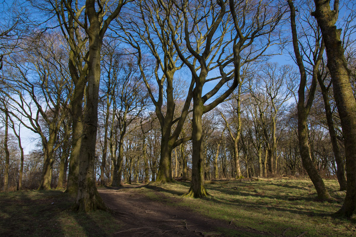 Forest Walk at Cathkin Braes