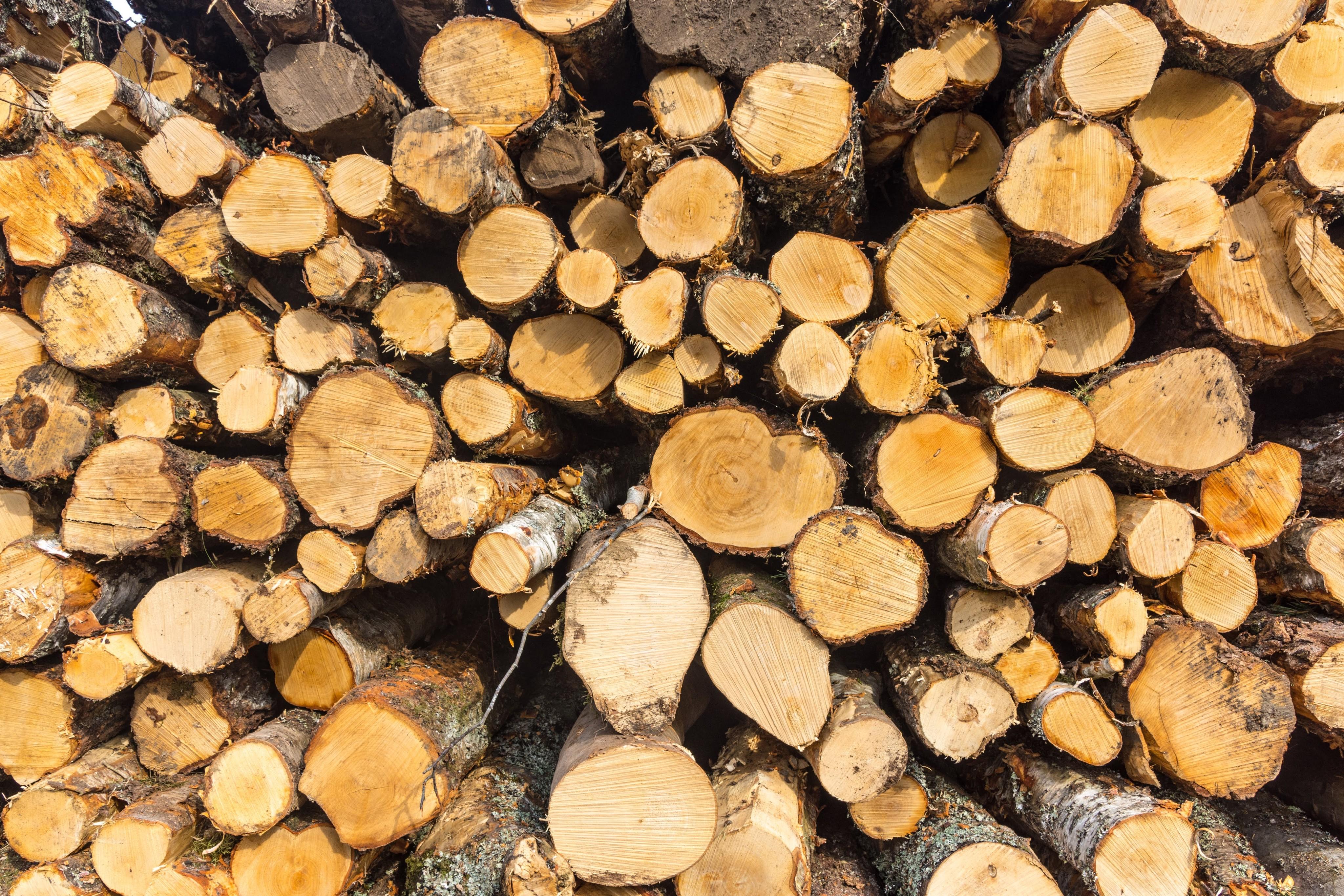 Log Pile Loch Rannoch